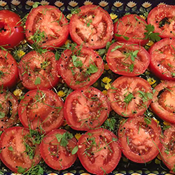 Roasted Tomatoes with Basil Micro Greens